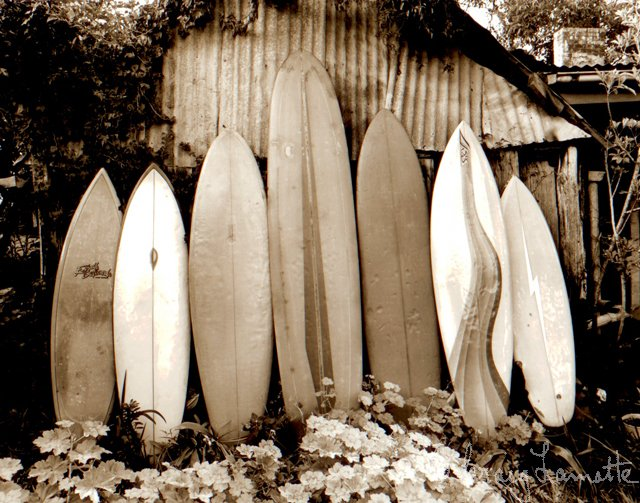 Classic Surfboards (Sepia)