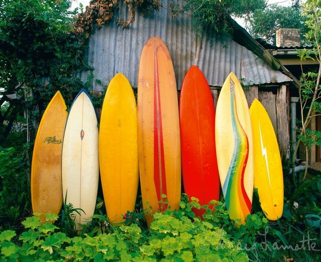 Classic Surfboards